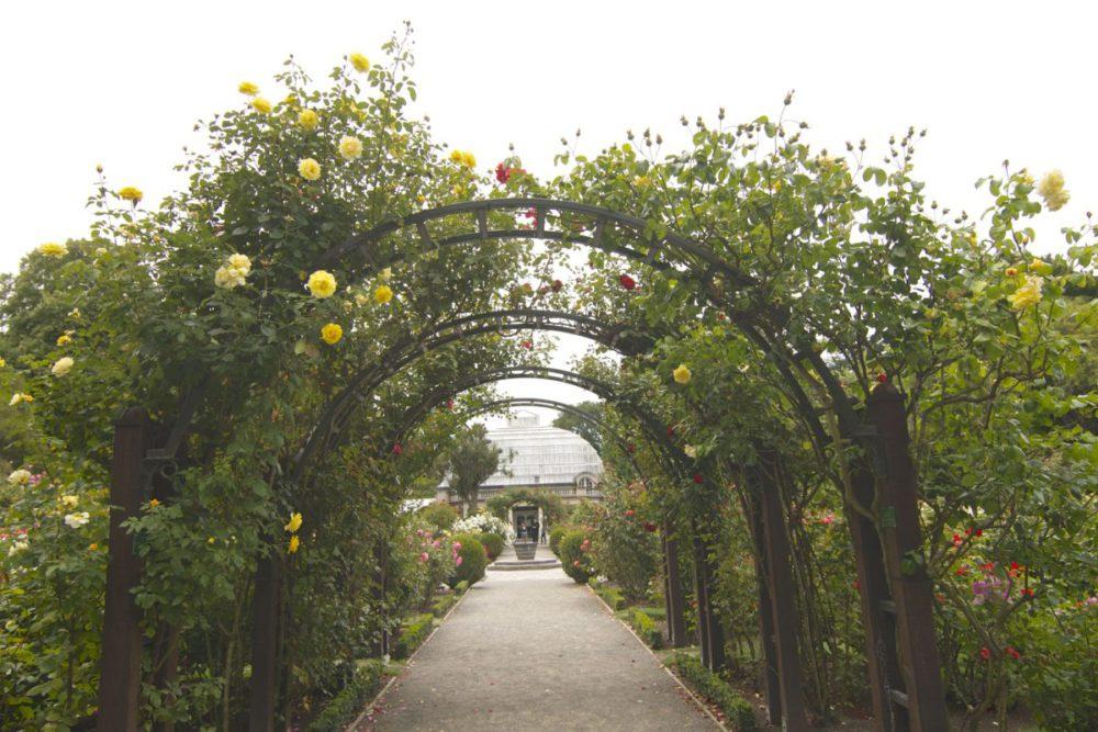 New Zealand's South Island - Christchurch Botanical Garden