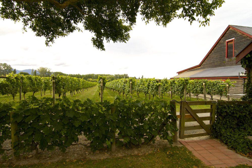 Neudorf Vineyards In Nelson New Zealand