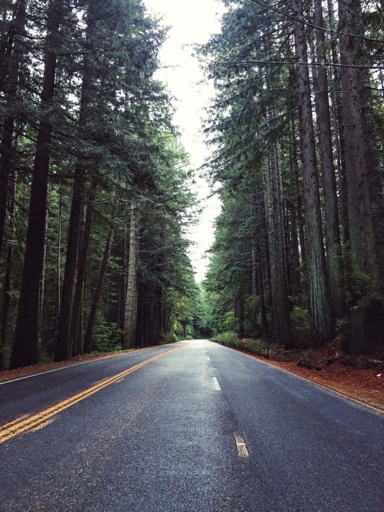 Redwood Forest in NorCal