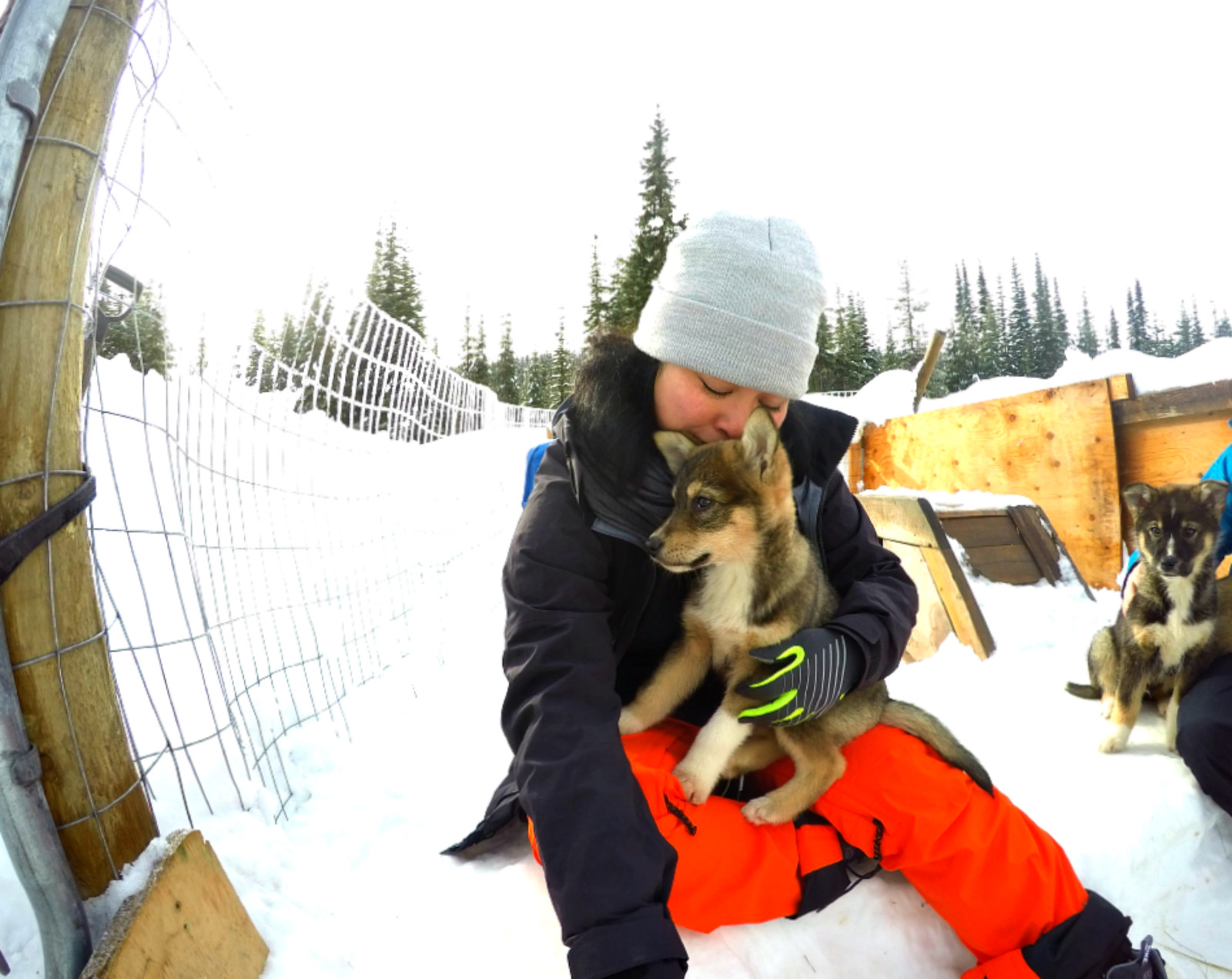 Puppy Love Mountain Man Dog Sled Adventures GoPro