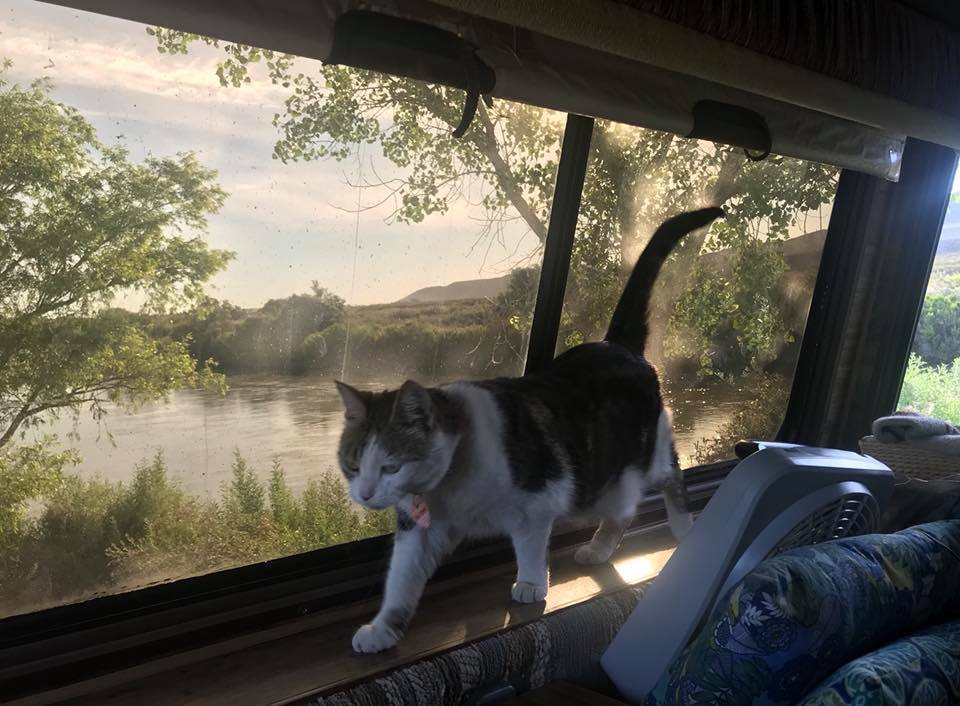 A cat walks on a narrow ledge below the large back window of an RV.