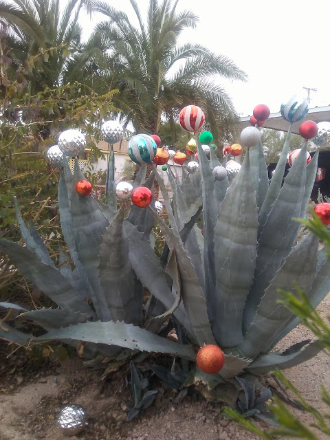 Shiny, round Christmas tree ornaments are balanced on the tips of pointy desert plants.