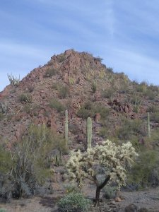 Small, rugged, rocky hill with little vegetation in the background.  Cholla cactus in the foreground. Young saguaros without arms in the mid-range of the photo.