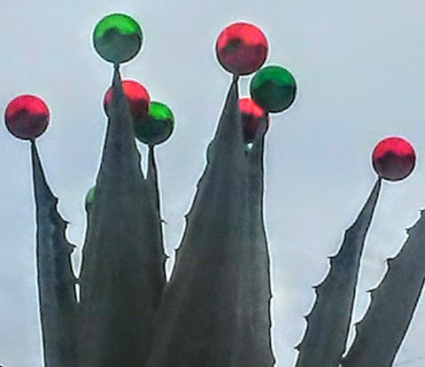 Shiny and round red and green Christmas tree ornaments are perched on the pointy ends of desert plants. The photo has a dreamy quality to it.