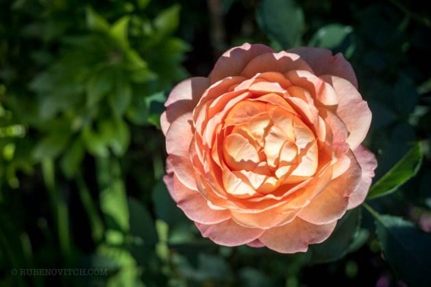 GardenTour-1450013