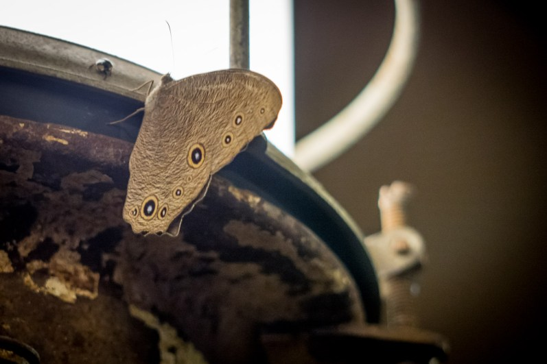 The beauty, colors and shapes of moth was an inspiration that transpires into the wood and sandstone base.