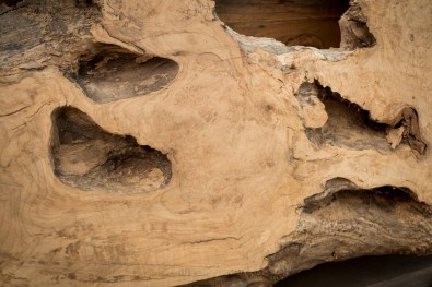 #19 Highly Figured, Birdseye Maple Burled Slab