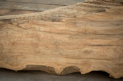 """#23 Maple 7' long, 2.25 thick 12-20"""""""
