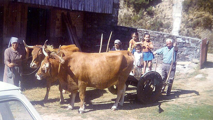 Resultado de imagen de carro gallego vacas