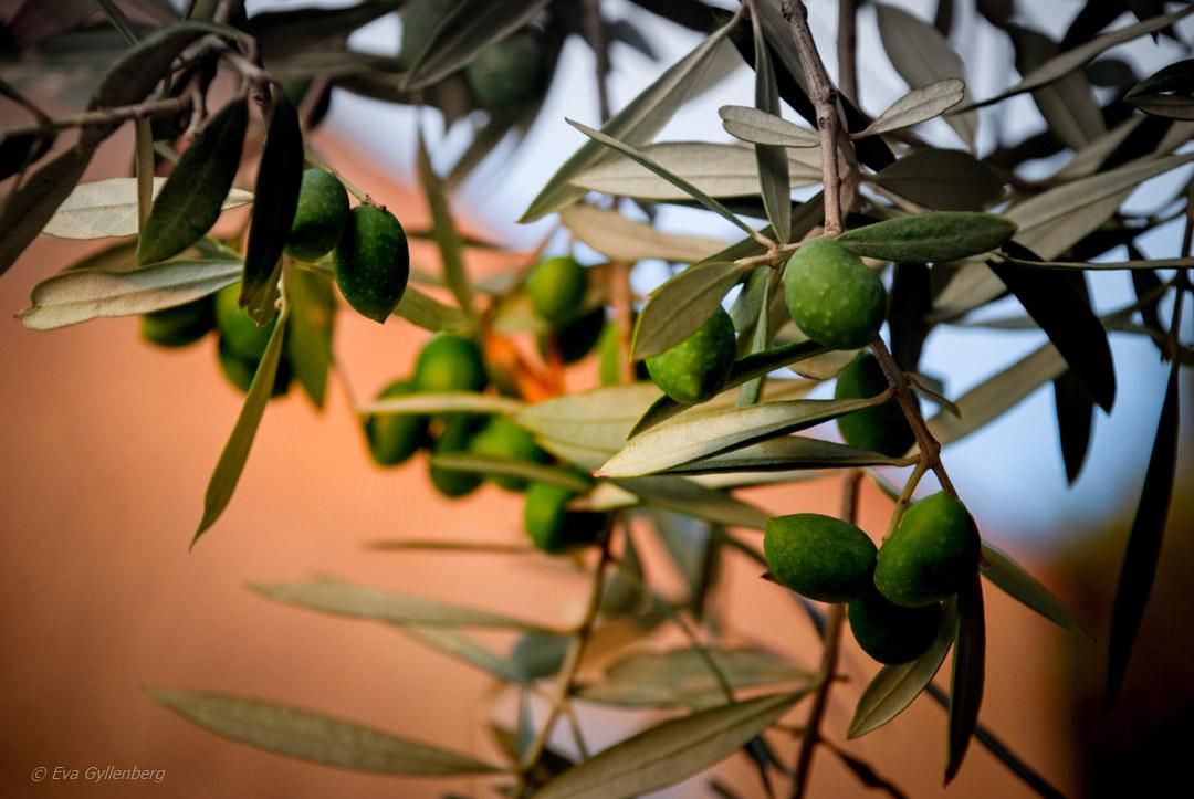 Mysiga favoriter i sydvästra Provence