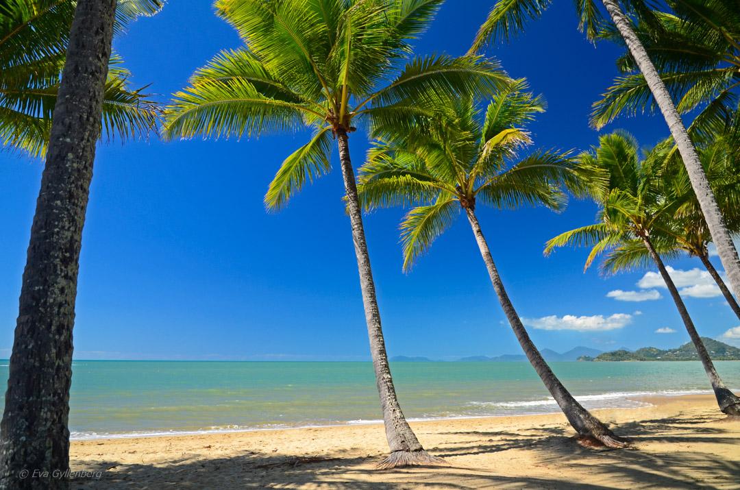 Topp 10 sevärdheter kring Cairns
