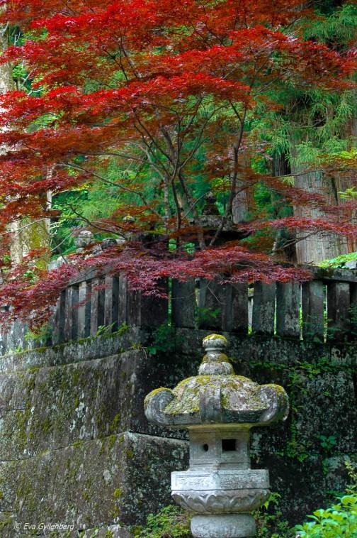 Nikko-Japan (3)