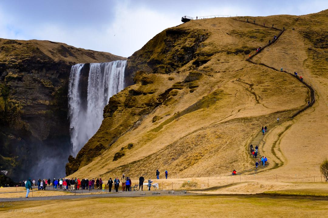 Island - Skogafoss - Dagsutflykt från Reykjavik till Vik
