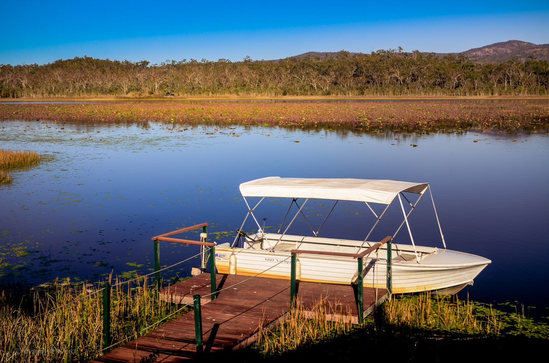 Fågelskådning vid Mareeba wetlands, Queensland