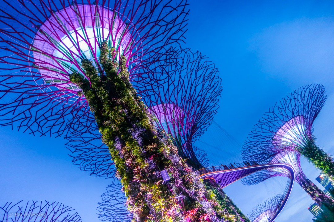 Singapore - Gardens by the bay
