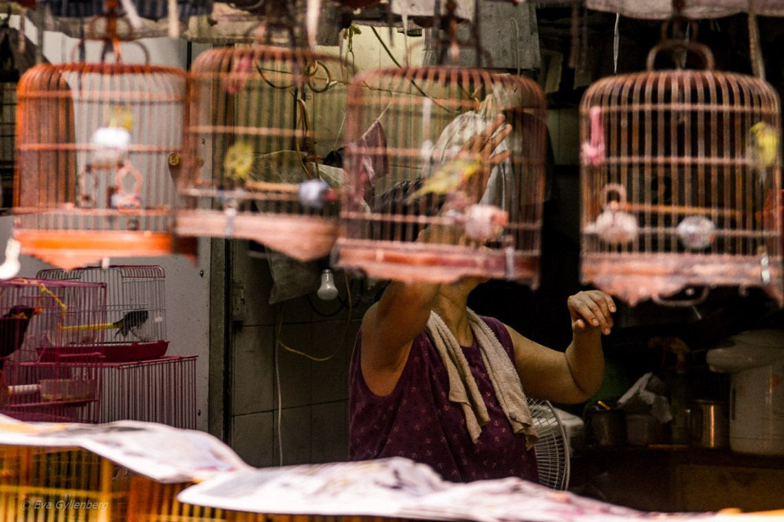 Hong Kong Bird Market