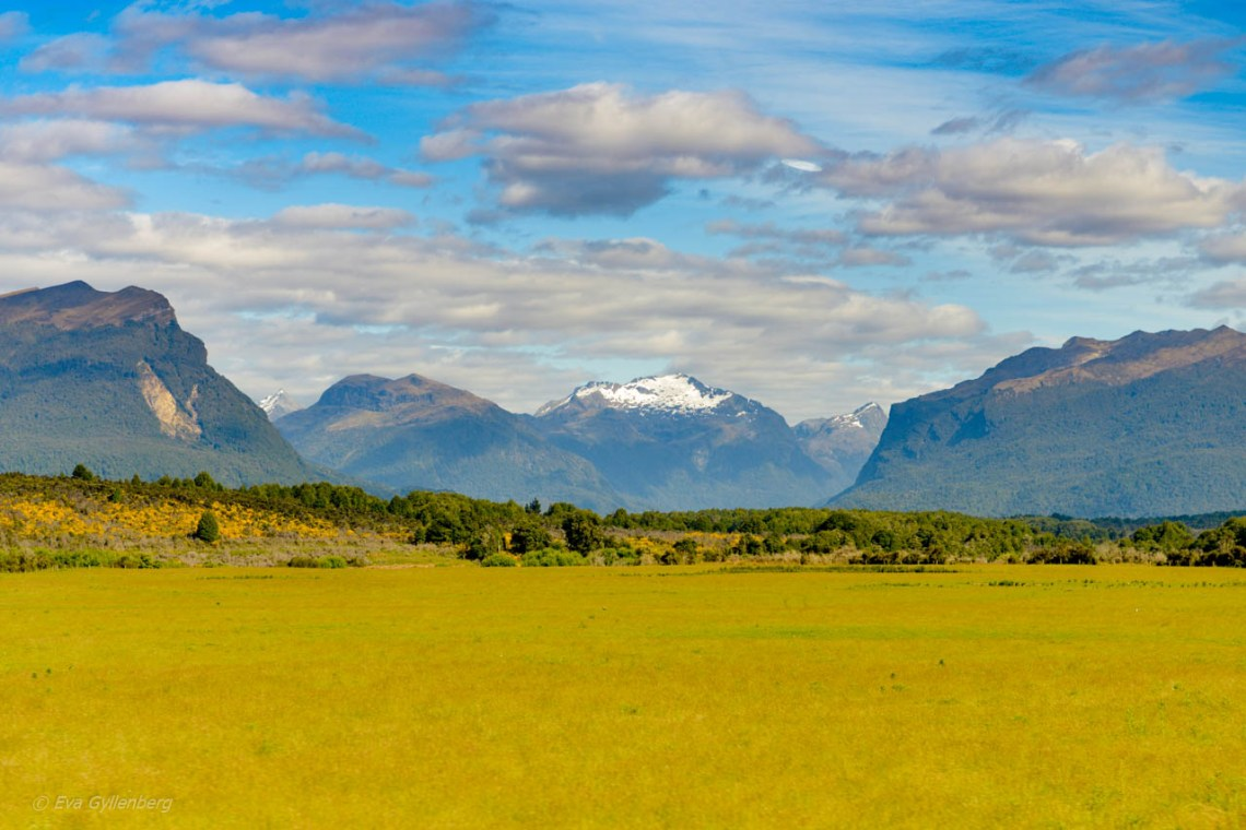 Snöklädda berg och gröna ängar på vägen till Milford Sound