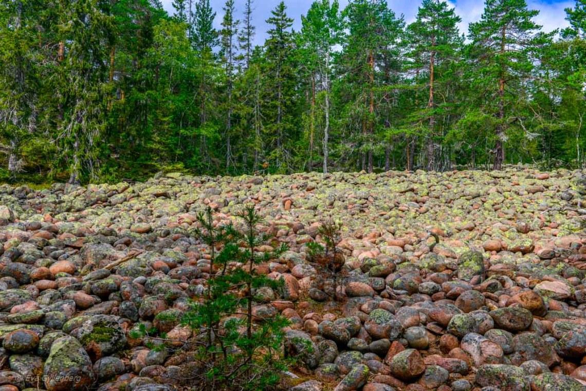 Rullstensås in Skuleskogen