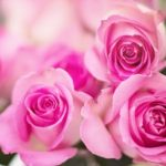 roses philosophy