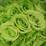 how to make green roses