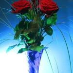 rose in vase using aspirin