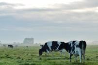 Zuiderweg, Zuidhorn (5) (1600x1067)