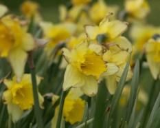 """Aan het einde van de bloeiperiode, bij """"de buslus"""" in Noordhorn"""
