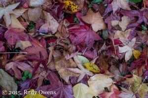Oregon Fall Foliage, October 2015