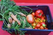 A la fin de chaque session, les jardiniers se partagent leur récolte en fonction des envies et des besoins © Laura Steen / Rue89Lyon