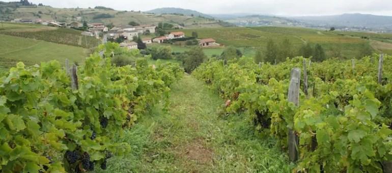 Lyon ne boude ni les vins du Beaujolais ni ceux du Rhône, venez les goûter en version nature !