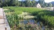 """Le bassin de filtration de la baignade """"Rivièr'Alp"""" Le bassin de la baignade écologique """"Rivièr'Alp"""" ©LB/Rue89Lyon"""