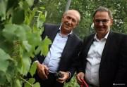 G. Collomb et D. Kimelfeld pendant les vendanges de la République des Canuts 2015. Sur le FB de D. Kimelfeld.