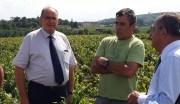 Bernard Perrut, député-maire de Villefranche-sur-Saône le 31 août 2016 dans les vignes de Villié-Morgon. ©LB/Rue89Lyon