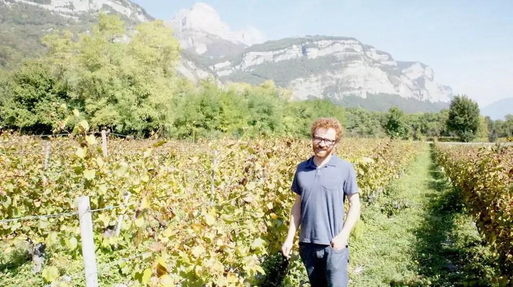 Thomas Finot dans une vigne de persan. Dans le Grésivaudan, les vignes sont palissées jusqu'à 2 mètres pour éviter l'humidité et avoir plus de feuilles. ©LB/Rue89Lyon