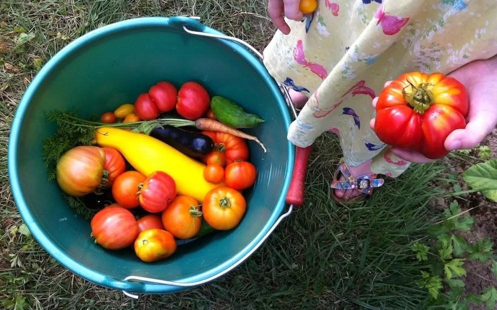 Jardins familiaux : on ignore tout de la qualité des sols et des légumes