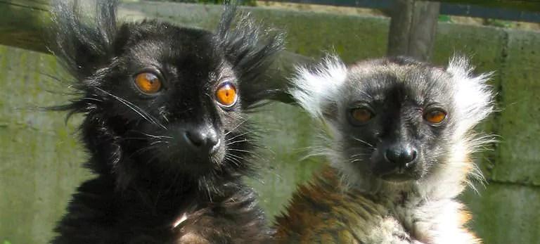 Marche pour la fermeture du centre de primatologie de Niederhausbergen samedi