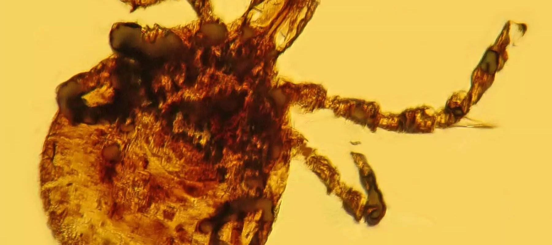 Maladie de Lyme : plus de 100 médecins lancent un cri d'alarme