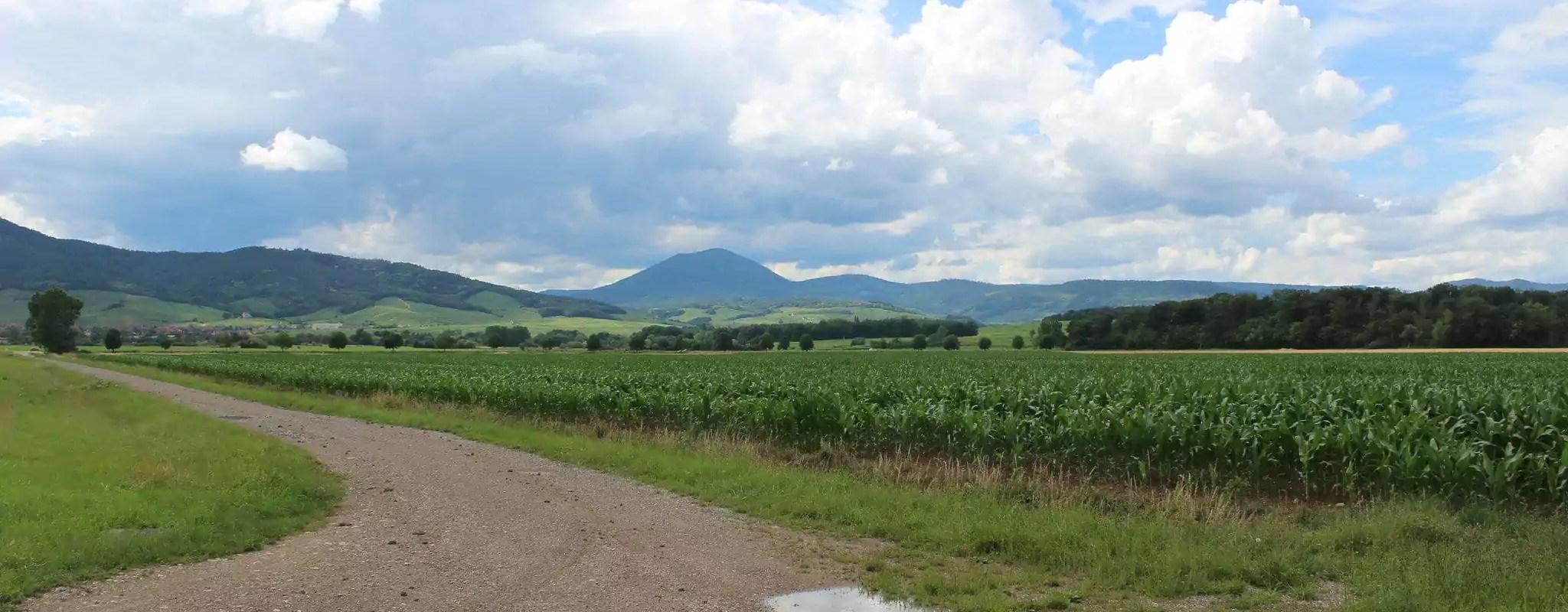 Amazon abandonne son projet d'entrepôt à Dambach-la-Ville