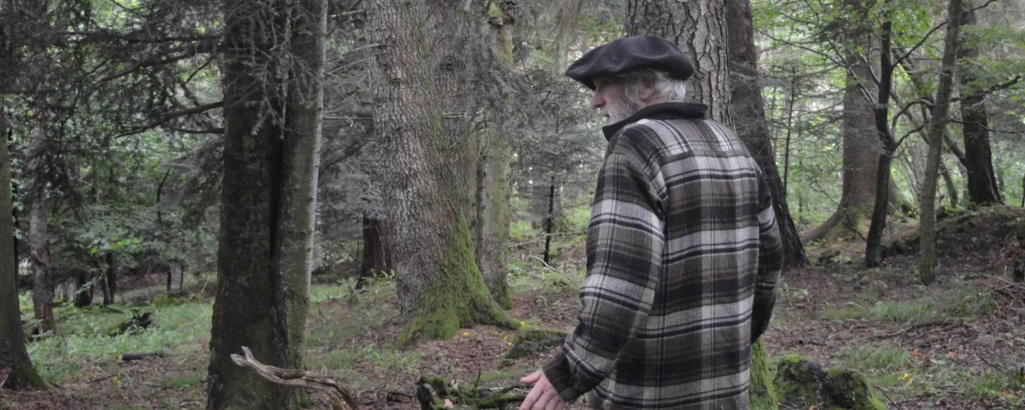 Sans prédateurs, les cerfs mangent la forêt vosgienne, avec la complicité des chasseurs