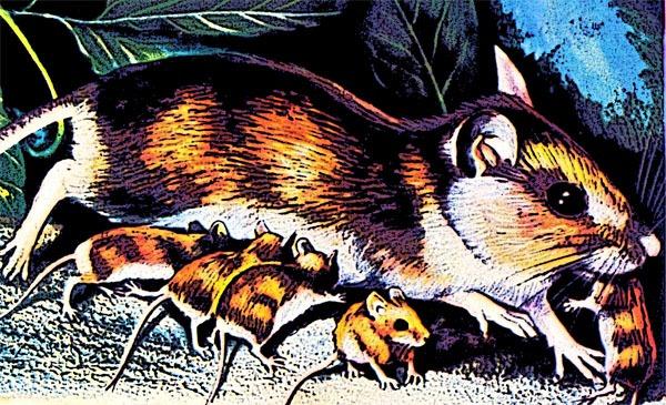 Os ratos que se protegem entre eles no Sporting