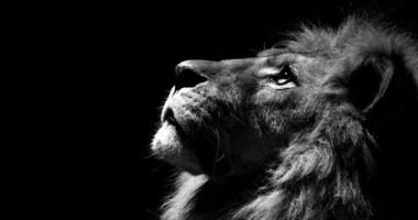 Lendas de Leão