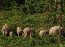 Kui Buri Nationalpark Thailand