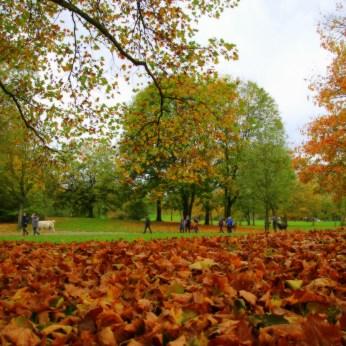 Durch den Park und Wald