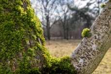 Baum, Moos und Netz