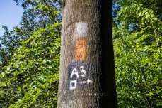 Markierungen am Baum