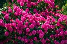 Flower Power mitten im Wald
