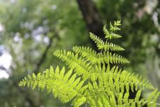 Erinnert mich immer an die Fotosynthese