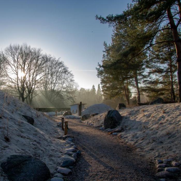 Dünen im Rombergpark