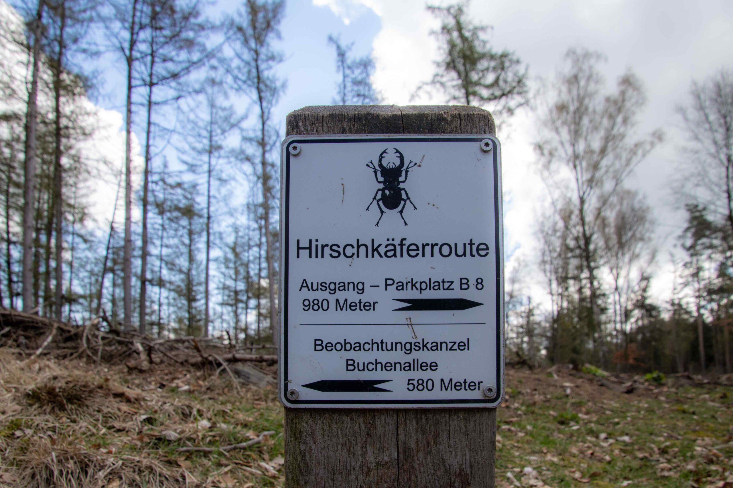 Wandermarkierung Hirschkäfer