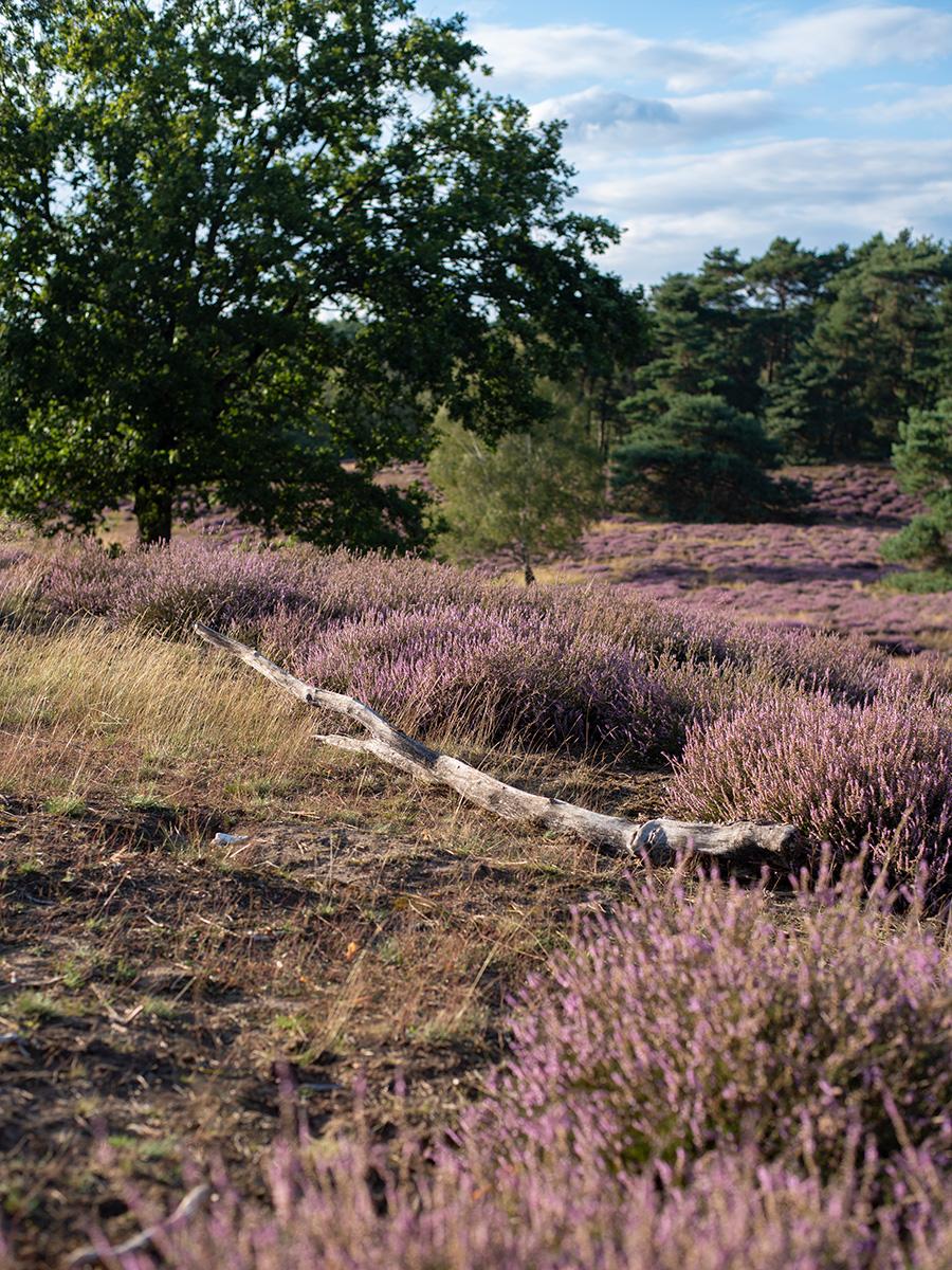 Wandern in der Westruper Heide: Ausflugstipp für das nördliche Ruhrgebiet